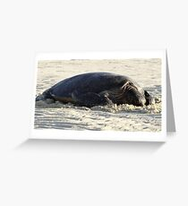 Turtle Resting - Heron Island, Australia Greeting Card