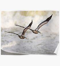 Never Leave Your Wingman - Pelican Pair Poster
