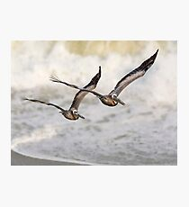 Never Leave Your Wingman - Pelican Pair Photographic Print