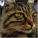 Aslan The Long Haired Tabby Cat by taiche