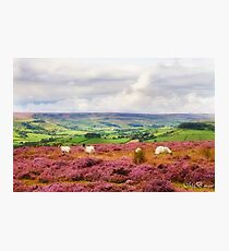 Above Rosedale Photographic Print