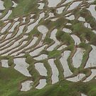 Senmaida Rice Paddies by Skye Hohmann