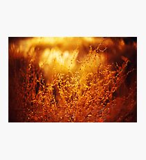Nature Background with Golden Grass Photographic Print
