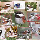 Chickadee im Wintermosaik von Peggy Collins