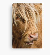 Highland Cow Portrait Canvas Print