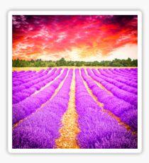 Lavender field Sticker