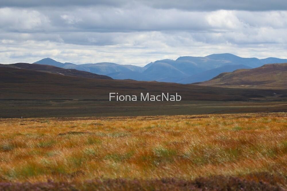 Cairngorm autumn by Fiona MacNab