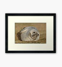 Grey Seal Pup Framed Print