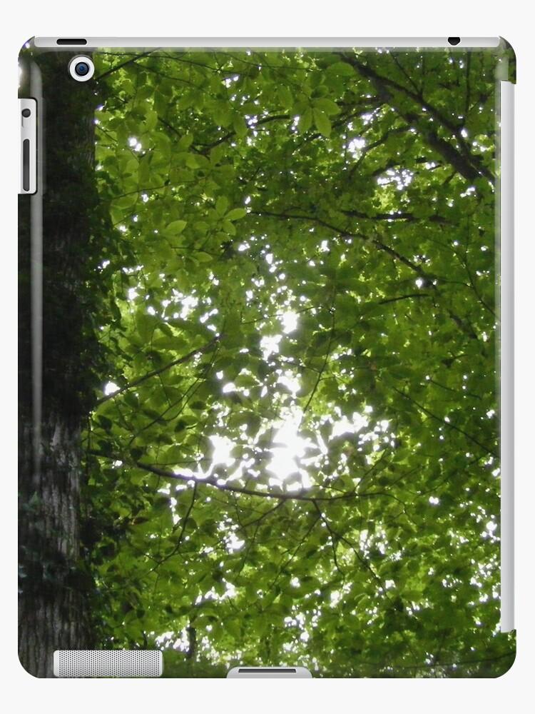 Canopy by ElviraTSquirrel
