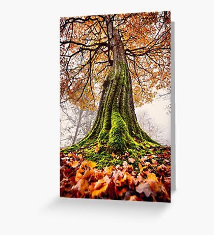 The Power of Roots Greeting Card
