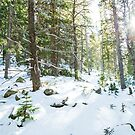 Snowy Forest Wilderness Playground by Bo Insogna
