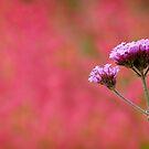 Purple Flower by JRMGallery
