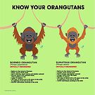 Know Your Orangutans by PepomintNarwhal