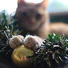 Ginger Cat Calendar by NonfatalNerdism