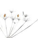 Flower power by JEZ22