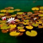 Water Lilies by Linda Bianic