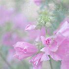 Odd Stemmed Wild Flower  by Sandra Foster