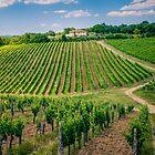 Chianti Region, Italy by Melissa Fiene