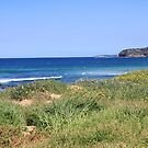 Mona Vale 10 by Jane Wilkinson-Franssen