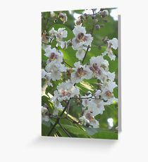 Indian Bean Tree Blossom VII Greeting Card