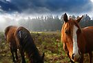 Horses life by Sandro Rossi