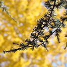 Yellow Fall Tree Leaves Landscape Pine Tree by BasleeArtPrints