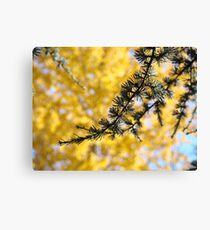 Yellow Fall Tree Leaves Landscape Pine Tree Canvas Print