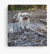 Sandy.. Such A Sweetie. Canvas Print