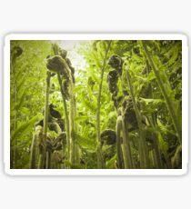 Ferns Sticker