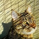 Striped Tabby by Chet  King