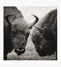 a conversation Photographic Print