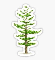 Weißkiefer (Pinus strobus) Sticker