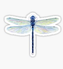 Spatterdock Dragonfly Sticker