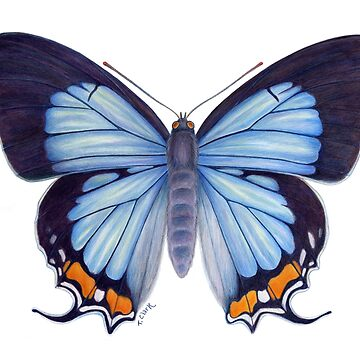 Imperial Blue Butterfly by edenart