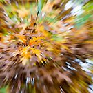 Abstract Leaves 3 by Rebecca Cozart