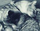 *Untitled Fizgig, Sally, Ludo by Margaret Bryant
