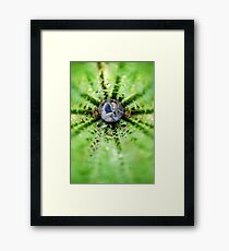 Sleeping snail Framed Print