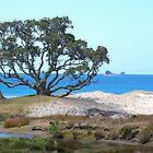 Pohutukawa tree..... A tree with a history..........! by Roy  Massicks