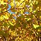 FALL COLORS(ONE total color only)
