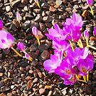 Royal Botanic Garden (Edinburgh)_1 by dyanera