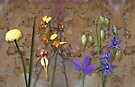 Orchids and Wildflowers on old rusty Pink n Caramel Metal by Leonie Mac Lean