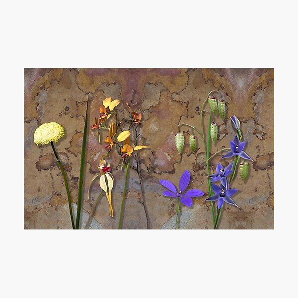 Orchids and Wildflowers on old rusty Pink n Caramel Metal Photographic Print