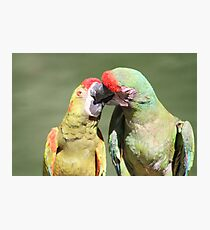 Kissing Macaw Photographic Print