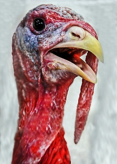 You  Eat WHAT at Thanksgiving??? by Heather Friedman