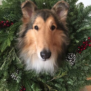 Rough Collie Christmas Wreath by jwphotos
