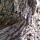 Tree Bark by Shulie1