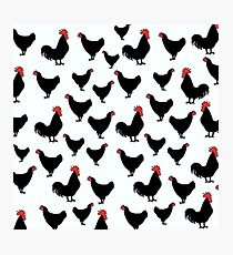 Poultry Photographic Print