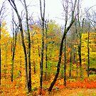 Fall-2014 by Elfriede Fulda