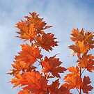 Orange Autumn Fall Tree LEAVES Blue Sky Art Prints by BasleeArtPrints