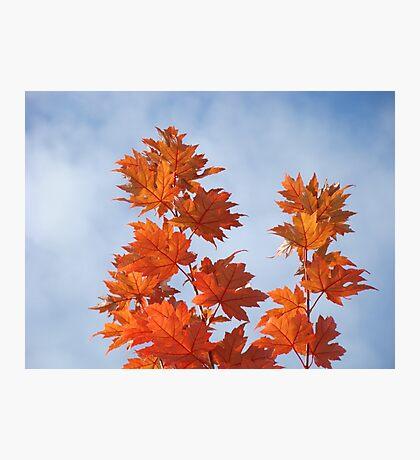 Orange Autumn Fall Tree LEAVES Blue Sky Art Prints Photographic Print